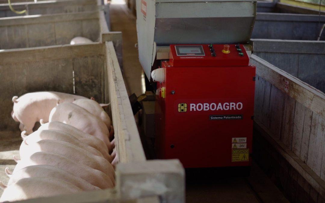 Robô alimentador de suínos com música clássica revoluciona produção de granjas da Região Sul